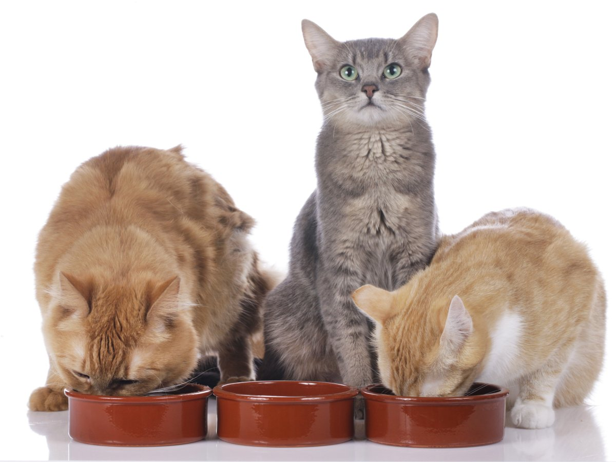 PET CHECK BLOG - 3 cats eating together