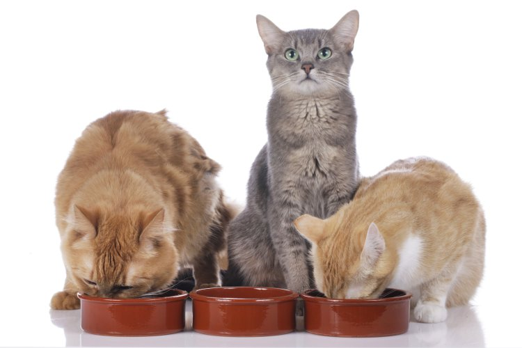 cats, eating,