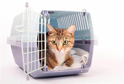 PET CHECK BLOG - Cat in crate