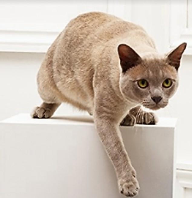 cat, modelling,