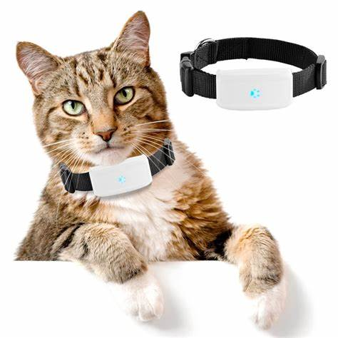 Cat, wearing, tracker, collar,