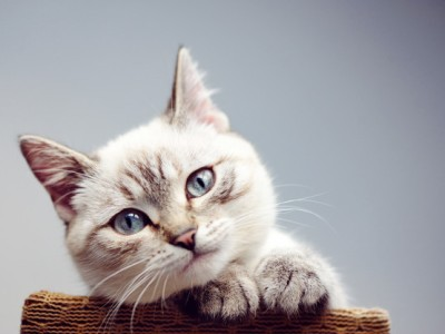 PET CHECK BLOG - close up picture of a cat