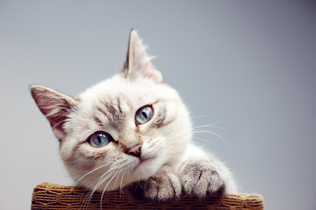 PET CHECK BLOG - cat