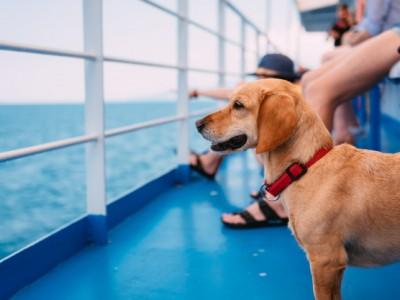 PET CHECK BLOG - dog on ferry