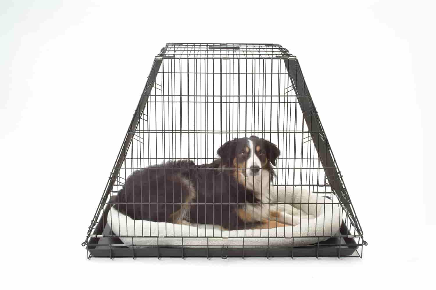 dog, in, crate,