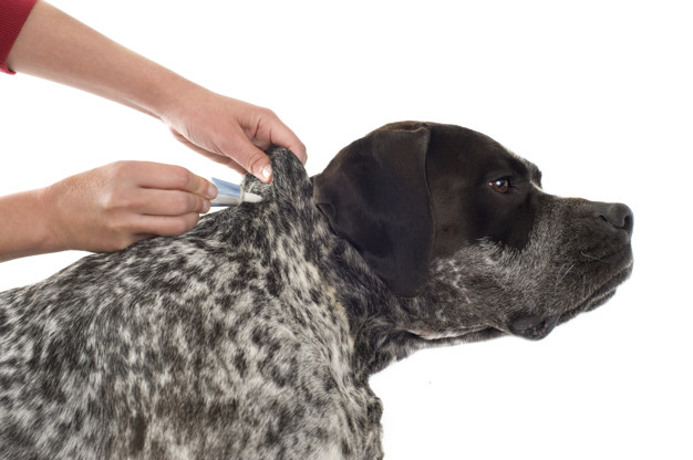 PET CHECK BLOG - Dog having flea treatment