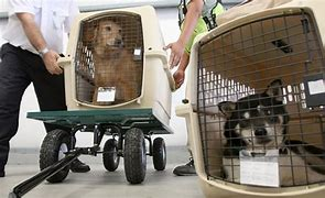 Dogs in crates being loaded onto air cargo