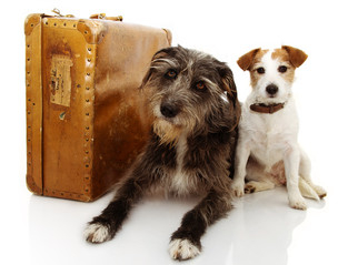 2 dogs and suitcase