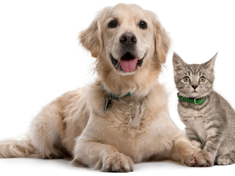 PET CHECK BLOG - Dog and cat sitting together