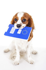 PET CHECK BLOG - Dog and pet passport in its mouth