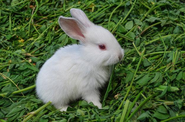 Baby white rabbit in meadow