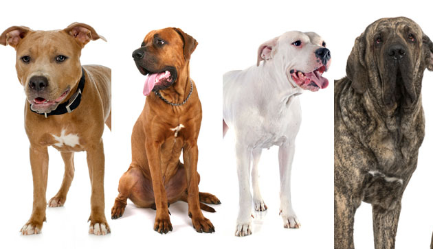 $ Banned breeds of dogs Image BT