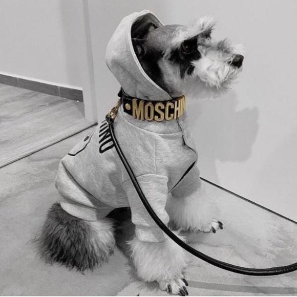 PET CHECK UK Moschino Dog Pet Modelling