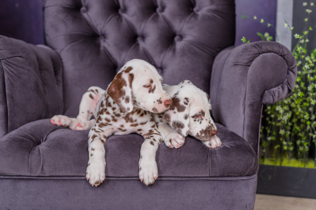 PET CHECK BLOG - two dogs watching tv