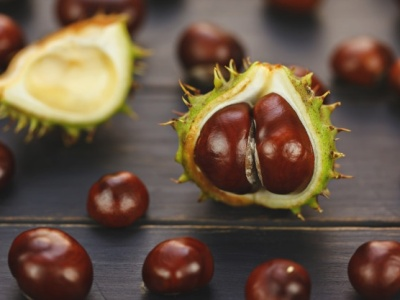 PET CHECK BLOG - Conkers lose and in their burrs