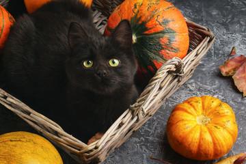 Cat sitting amongst pumpkins