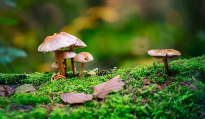 Wild fungi