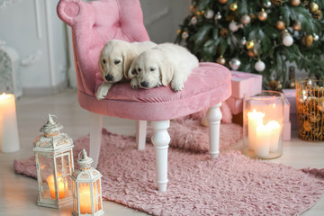 Christmas scene with dogs sitting in chair