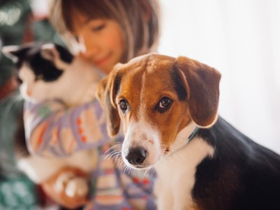 PET CHECK BLOG - Christmas dog and cat with young girl