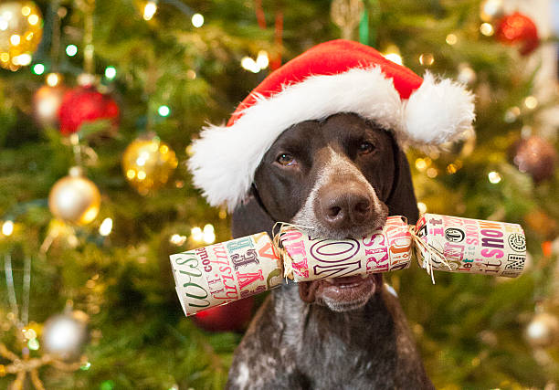 Dog with Christmas Cracker