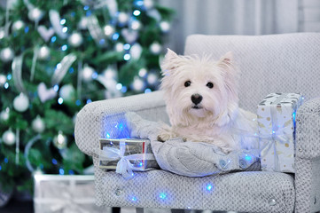 Christmas scene with dog sitting in chair