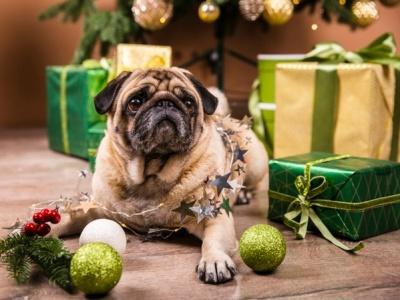PET CHECK BLOG - Dog by Christmas Tree
