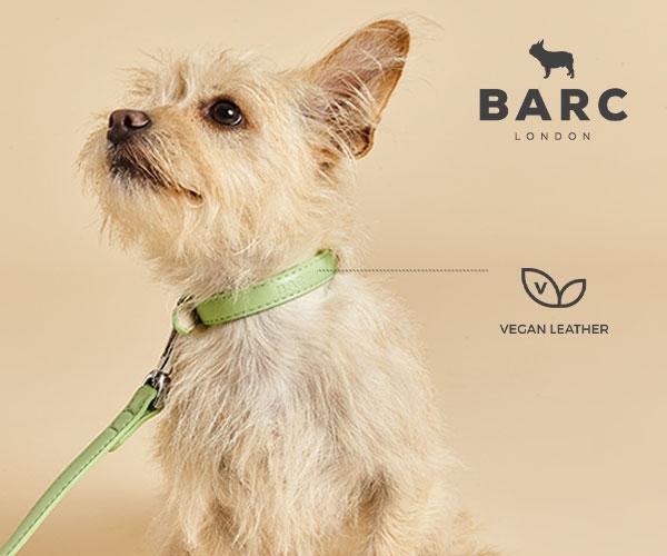 Dog wearing a Barc Lead