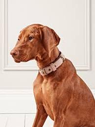 PET CHECK BLOG - Dog wearing a luxury collar