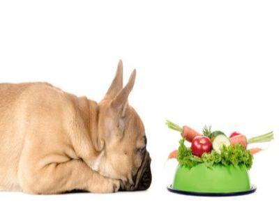 PET CHECK BLOG - Dog looking at a bowl of vegetables
