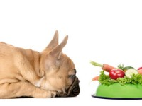 PET CHECK BLOG Dog looking at a bowl of vegetables
