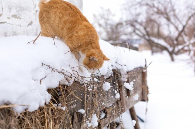 Tabby cat in snow