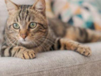 PET CHECK BLOG Cat sitting on settee