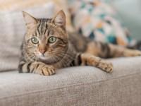 Cat on settee
