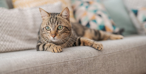 PET CHECK BLOG - Cat on settee