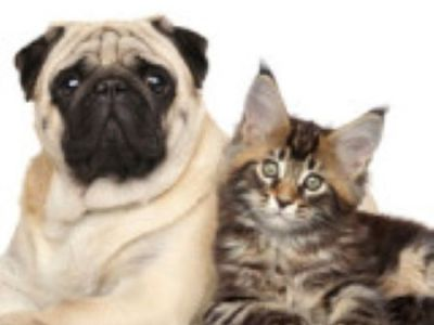PET CHECK BLOG Dog sitting with kitten
