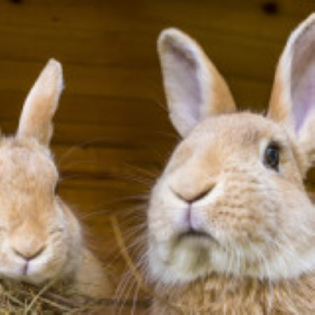 PET CHECK BLOG two rabbits in their hutch