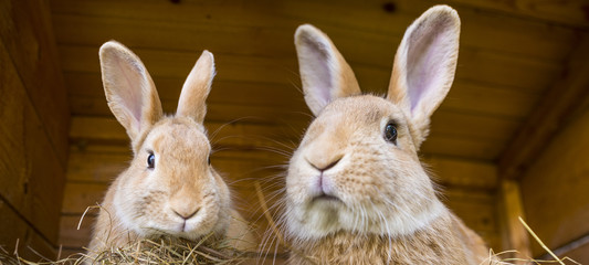 2 rabbits in hutch