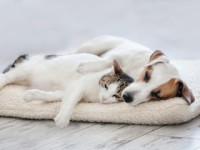 Dog and cat sleeping on mattress