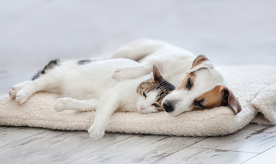 PET CHECK BLOG - Dog and cat sleeping on mattress