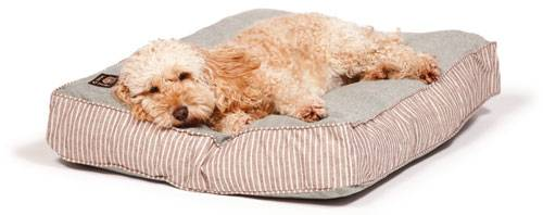 Dog lying on comfortable bed mattress