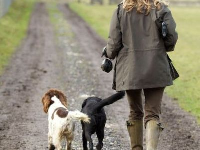 PETCHECK BLOG - Lady walking 2 gun dogs