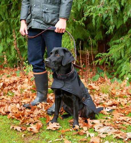 PET CHECK BLOG - Barbour boots and dog wearing Barbour coat