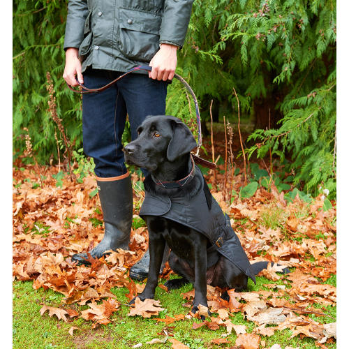 Barbour boots and dog wearing Barbour coat