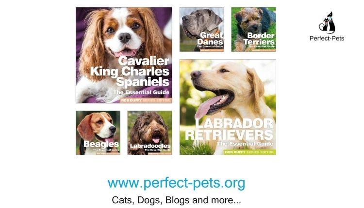 PET CHECK BLOG - Perfect Pets Banner