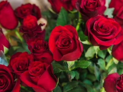 PET CHECK BLOG - Red Roses