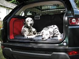 PET CHECK BLOG - Dog sitting in car boot