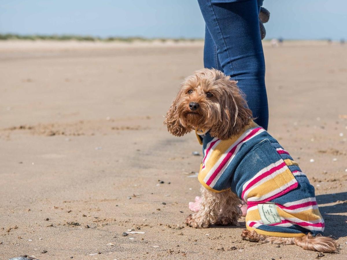 PET CHECK BLOG - Dog wearing striped beach coat
