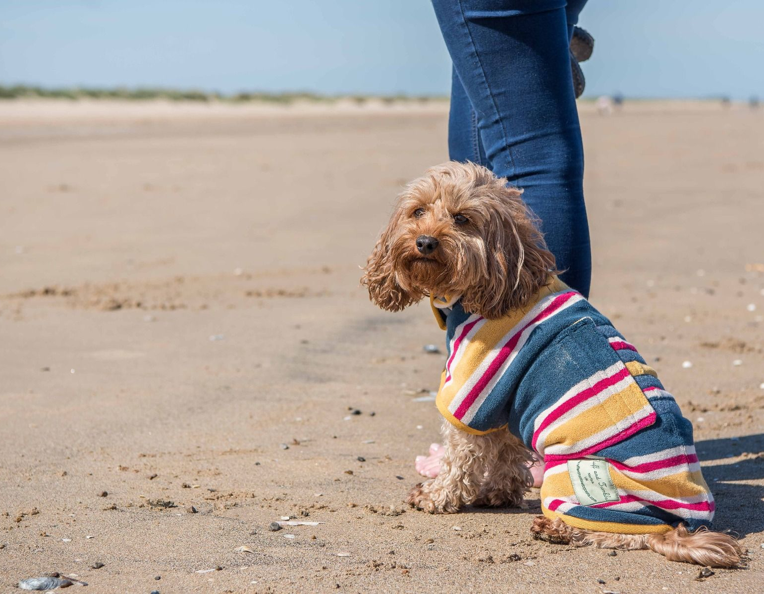 PET CHECK BLOG - Dog wearing striped beach coat