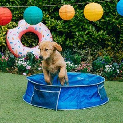 PET CHECK UK Dog in paddling pool