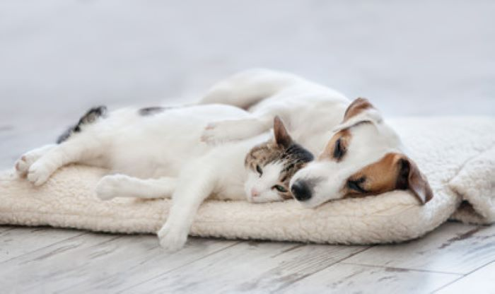 PET CHECK BLOG Dog and cat sleeping on a cushion